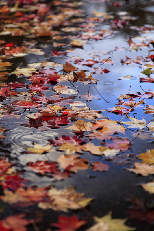 水たまりの紅葉.jpg